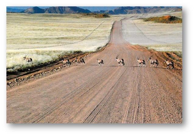 Découvrez le trésor d'Afrique : le désert du Kalahari